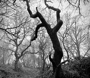 image of gnarled and ominous tree forms for book cover
